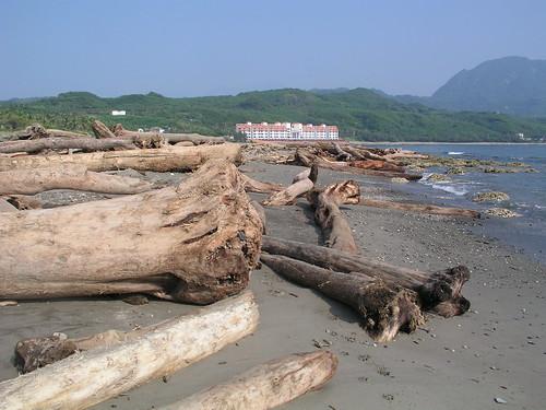 2009年莫拉克風災後兩周進行珊瑚體檢 海岸沿線皆漂流木 增加行動困難度