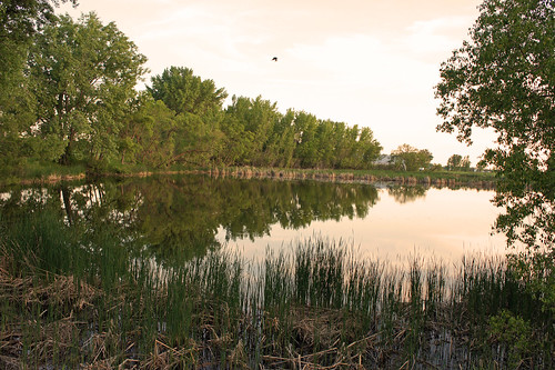 Quiet Evening On The Pond