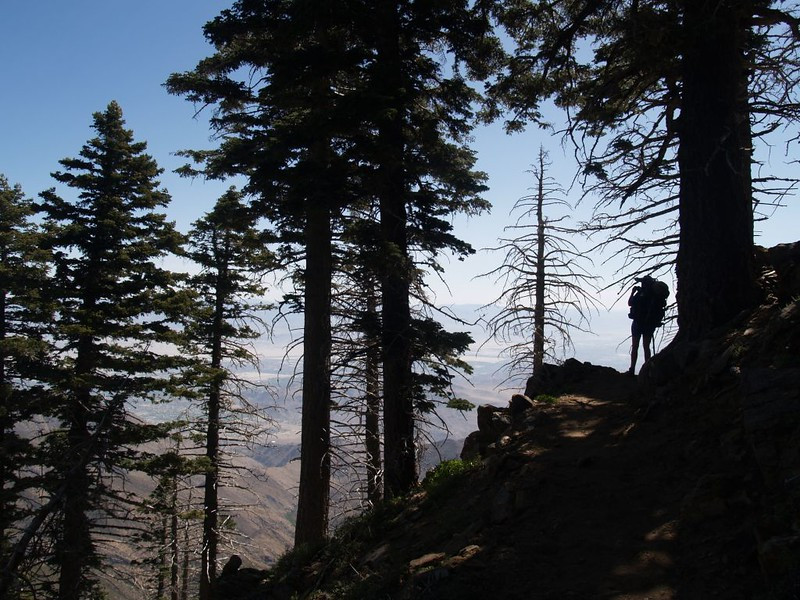 Hiking around the east side of Apache Peak on the PCT - silhouette in the pines