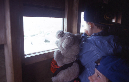Piggy and Tommy looking out the blind at the puffins and razorbills on Machias Seal Island