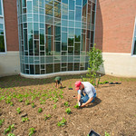 13-06-02 -- JUNE 2013: Groundskeepers work on landscaping around State Farm Hall.