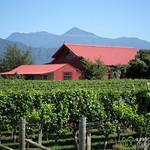Marlborough Winery - New Zealand