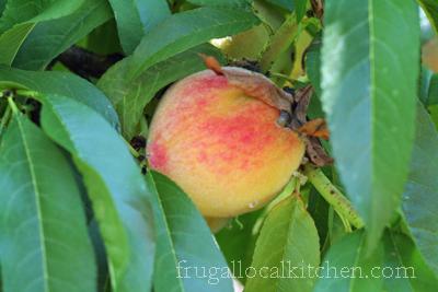 Peach Recipe Roundup
