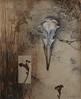 Anatomy of a Rocky Shoreline: Gull