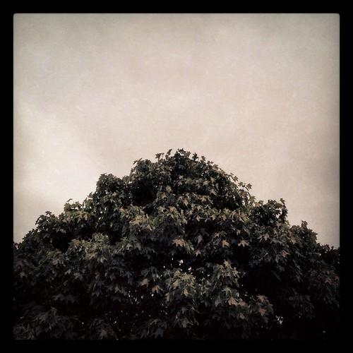 augustsky by Nature Morte