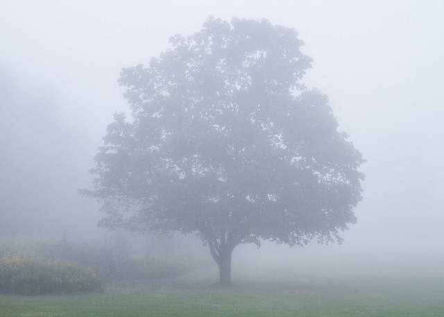 Tree in Fog #1