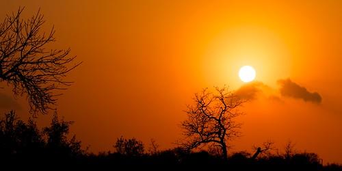 africa red sky naturaleza sun sunlight tree sol nature sunrise skyscape landscape southafrica arbol arboles sunny amanecer cielo afrika krugernationalpark suidafrika sudáfrica
