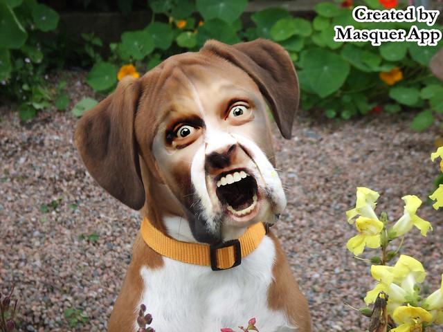 Dog Screaming Food