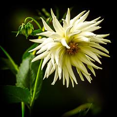 Ventnor Botanic Garden 2013 - 03