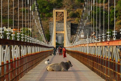 bridge india suspension mp vaches madhyapradesh omkareshwar pontsuspendu