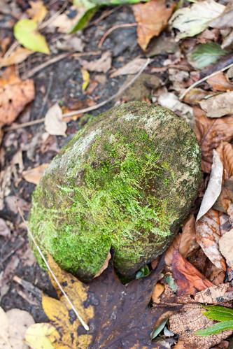 苔生した石