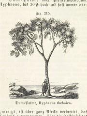 """British Library digitised image from page 781 of """"Handbuch der Erdkunde"""""""