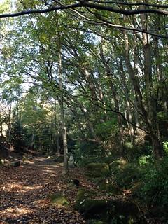 桜ヶ丘公園の穴場