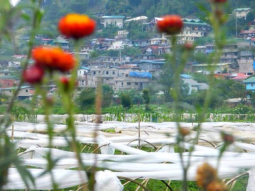 travel nature beautiful field view great lovely chill picofday flickrfriday strawberryfeilds photoofday latrinidadbenguet