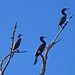 three cormorants por lisa voigt garms