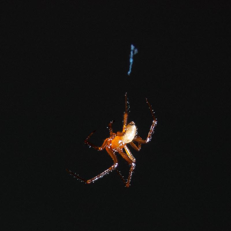 房間的小蜘蛛