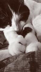 Haru sleeps by jyllianm