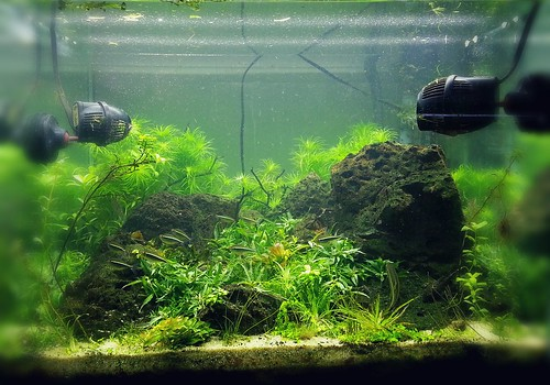 33g Bermuda Inspired Aquascape