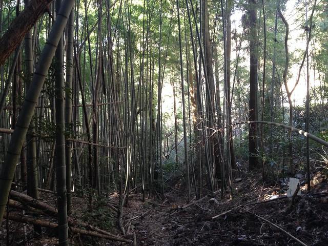 城ヶ峰 登山道 竹林