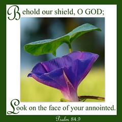 Psalm 84.9