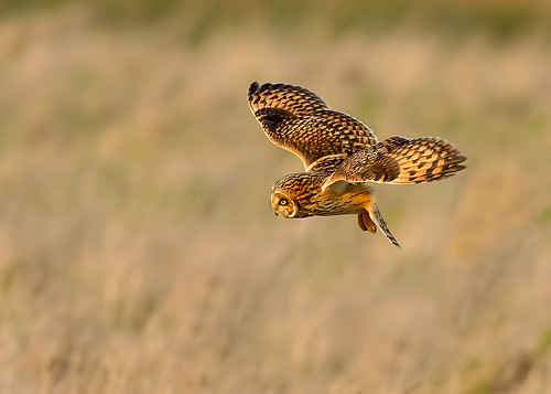 SEO - seen something and applied full air brakes in the late afternoon sun (for a change we saw sunshine) by Andy Pritchard - Barrowford