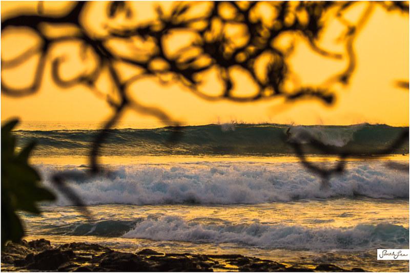 11_Kona_Banyans_Swell_Surf.jpg