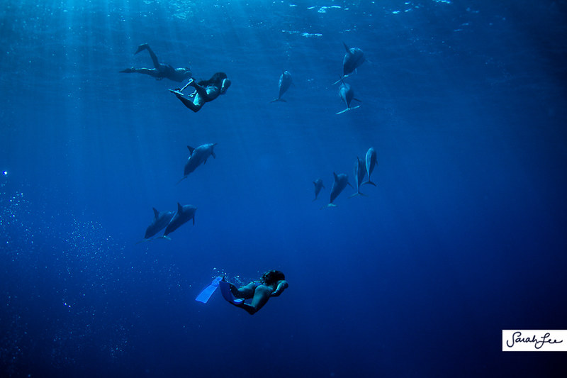 hawaii_underwater_dolphins_015.jpg