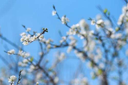 mùa xuân trên cao...
