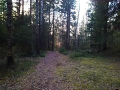 Hovskogen- Gjørme Downhill