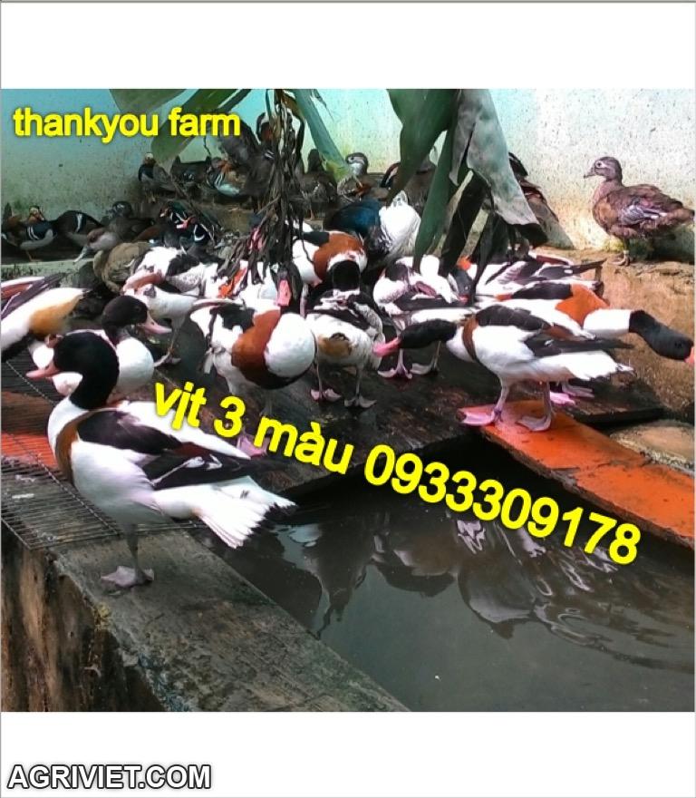 33162266224_27ffa11ca9_o.jpg