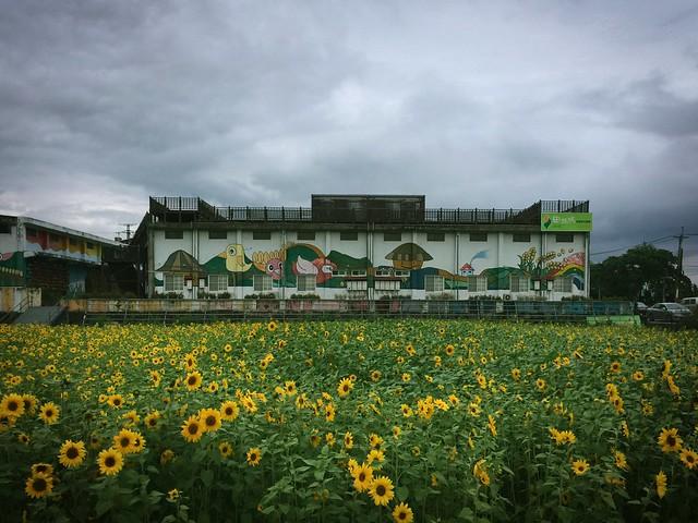 62/365 Flower field,