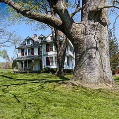 This is the farmhouse that sits on the horse farm I photographed last week. Such a beautiful property. And that tree! LOVE it!