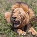 African Safari_2017-03-12_00-59-47_E13A9737©Robert Kelly2017.jpg