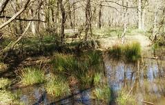 En ballade dans la forêt #forest #landscape #nature - Photo of Vacquiers