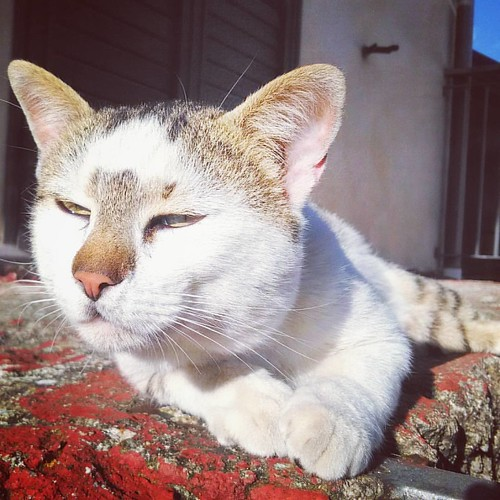 Oh, Vlady😻‼ #catlovers #catsunited #catsofinstagram #il_fotografo_magazine #fusagattini #gattiitaliani #gattissimi #asuszenfonego #excellent_cats #viewbug #yourartgallery #eyeemoninstagram #harusphotos