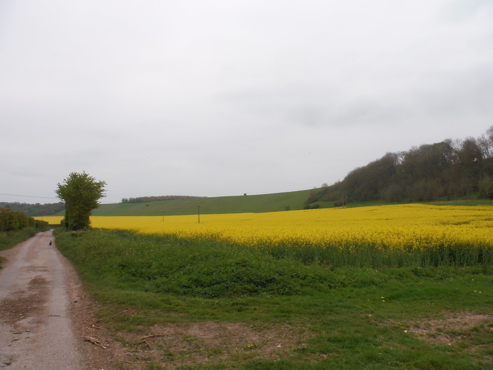 Ashley Hill SWC Walk 265 - Dean to Mottisfont and Dunbridge (Alternative Start from Salisbury)