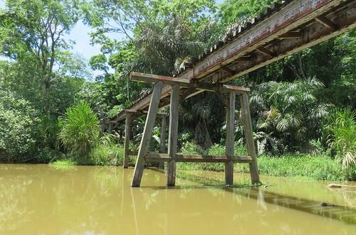 costarica jungle canal boat tour limon costa rica