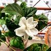 Ei ful amar...  #balcony #precious #bigday #beautifulmorning   Day 9