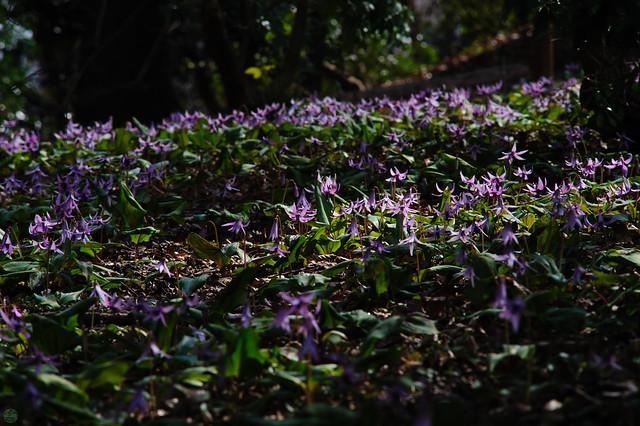 20170402-DS7_2134.jpg, Nikon D700, AF Zoom-Nikkor 70-210mm f/4