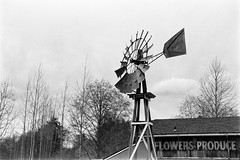 Flowers & Produce Windmill