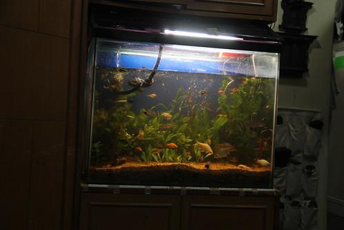 Marziya Shakir Shoots Her Fish Tank by firoze shakir photographerno1