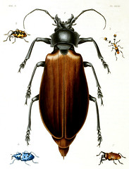 japanese rhinoceros beetle(0.0), hornet(0.0), arthropod(1.0), scarabs(1.0), animal(1.0), invertebrate(1.0), membrane-winged insect(1.0), fauna(1.0), beetle(1.0), illustration(1.0), pest(1.0),