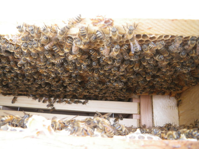 more brood
