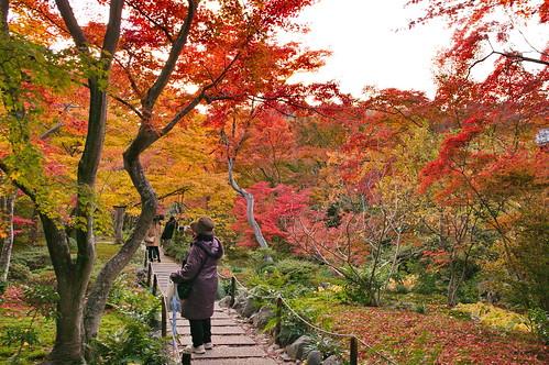 【写真】紅葉 : 宝筐院