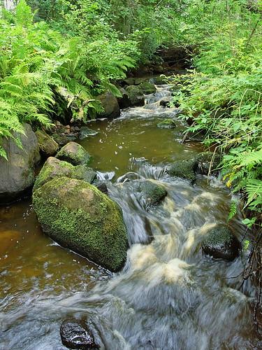 summer white fern nature water creek forest finland river rocks stream august rapid raahe pattijoki latvaoja kelliini lasikangas