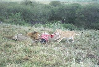 Kenia2002-08-02