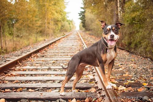 Train Tracks-9500