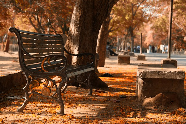 The empty bench...