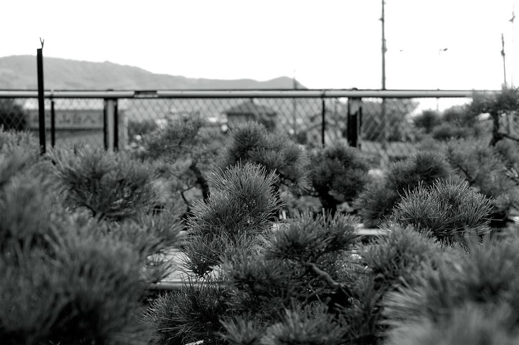 盆栽|鬼無(香川県高松市)