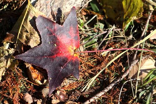 autumn fallleaves lake leaf fallcolor tn tennessee lakecounty fallleaf reelfootlake reelfootlakestatepark bmok bmok2